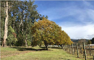 墨尔本酒庄 Vineyard in West Gippsland Area